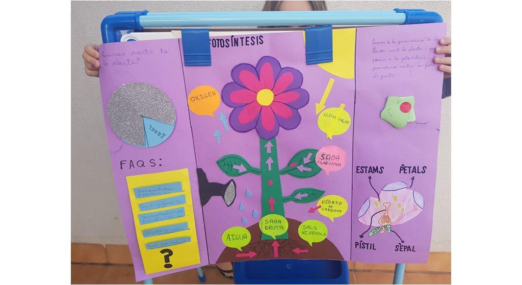 Plantes a l'escola Sant Nicolau